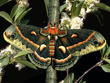 kabar--aneh.blogspot.com - 7 Serangga Cantik Paling Unik di Dunia